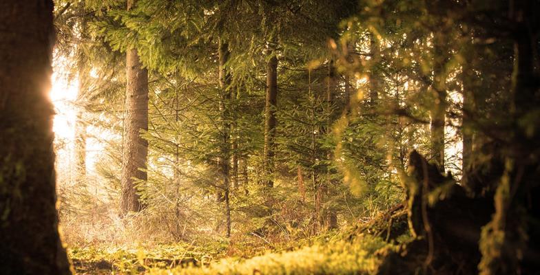 forest-klein